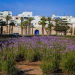 Paysage Voyage Essaouira Maroc
